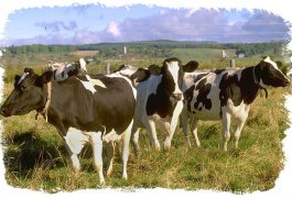 כל מה שרצית לדעת על חלב