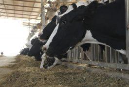 תנובת חלב לפרה – רב שנתי
