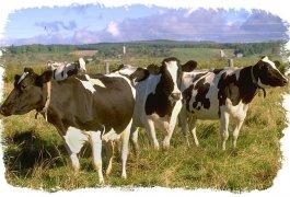 כל מה שרצית לדעת על פרות