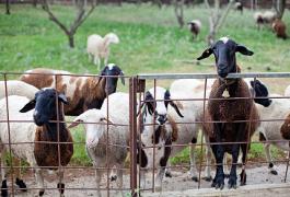 ארץ זבת חלב – משק מרקוביץ' במושב נחלים